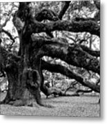 Angel Oak Tree 2009 Black And White Metal Print