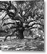 Angel Oak Tree Black And White Metal Print