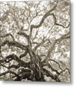 Angel Oak Tree Charleston Sc Metal Print