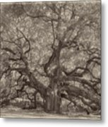Angel Oak Tree Metal Print
