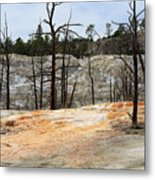 Angel Terrace At Mammoth Hot Springs Yellowstone National Park Metal Print