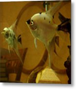 Angelfish Reflections Metal Print