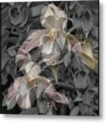 Angelic Hosts  The Hooded Nun Orchid Metal Print