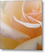 Angelic Rose Metal Print