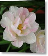 Angelique Tulips Metal Print by Beverly Cazzell