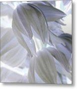 Angels Wings Metal Print