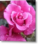 Angle Face Rose Metal Print