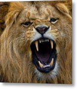 Angolian Lion Metal Print