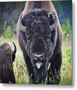 Angry Bison Metal Print