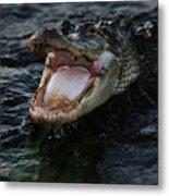 Angry Gator Metal Print