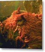 Angry Octopus Metal Print