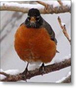 Angry Robin Metal Print