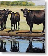 Angus Reflections Metal Print by Toni Grote