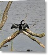 Anhinga And Alligator Metal Print