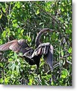 Anhinga In The Sun Metal Print