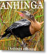 Anhinga The Swimming Bird Metal Print