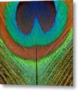 Animal - Bird - Peacock Feather Metal Print