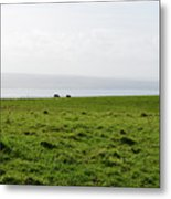 Animals Grazing In A Field Along The Cliffs Of Moher Metal Print