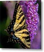 Anise Swallowtail Metal Print