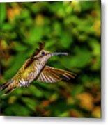 Anna Hummingbird  In Flight 2 Metal Print