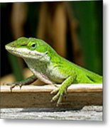Anole 16 Metal Print