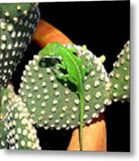 Anole Hanging Out With Cactus Metal Print