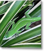 Anole Hiding In Spider Plant Metal Print by Lucyna A M Green