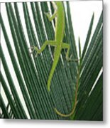 Anole With Palm - Cautious Metal Print