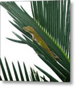Anole With Palm - Coy Metal Print