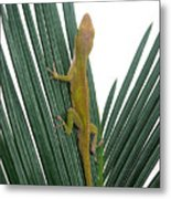 Anole With Palm - Curious Metal Print
