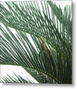 Anole With Palm - Entangled Metal Print