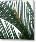 Anole With Palm - Looking Up Metal Print