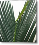 Anole With Palm - Shy Metal Print