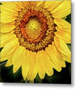Another Artistic Sunflower Metal Print
