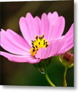 Another Cosmos Metal Print
