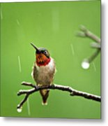 Another Rainy Day Hummingbird Metal Print