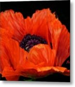 Another Red Poppy Metal Print