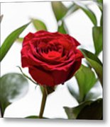 Another Rose Metal Print