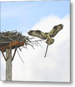 Another Twig For The Nest Metal Print