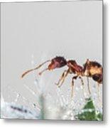 Ant Macro Photography Metal Print