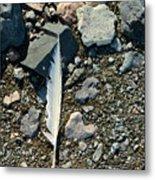 Antarctic Feather Metal Print