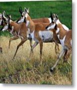 Antelope 1 Metal Print
