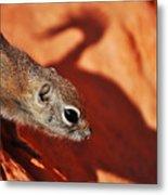 Antelope Ground Squirrel II Metal Print