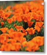 Antelope Valley California Poppies Metal Print