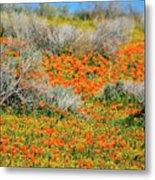 Antelope Valley Poppies Metal Print