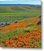 Antelope Valley Poppy Reserve Metal Print