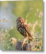 Anticipation - Little Owl Staring At Its Prey Metal Print