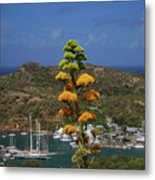 Antigua National Flower  Metal Print