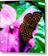 Antillean Crescent Butterfly On Impatiens Metal Print