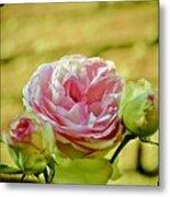 Antique Pink Rose Metal Print